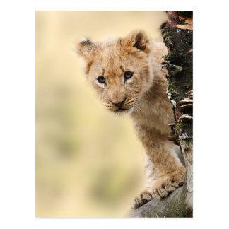 CUTE LITTLE LION CUB RANGE POSTCARD