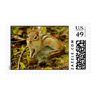 Cute Little Lounging Chipmunk Postage