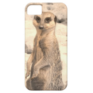 Cute Little Meerkat on Guard iPhone 5 Covers