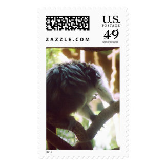 Cute Little Monkey Photo Stamps