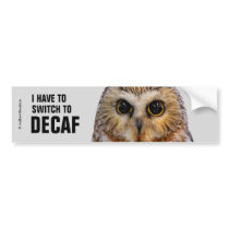 Cute Little Northern Saw Whet Owl Bumper Sticker