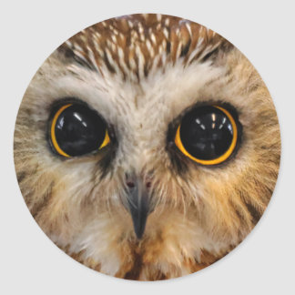 Cute Little Northern Saw Whet Owl Classic Round Sticker