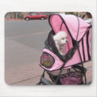 Cute little poodle in a doggie stroller, on a mous mouse pad