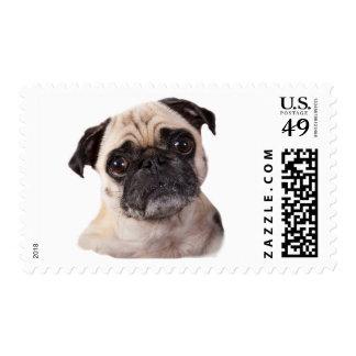 cute little pug dog stamp