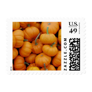 Cute little pumpkins photo postage stamps