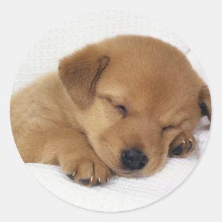 Cute little puppy classic round sticker