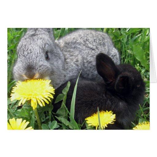 CUTE LITTLE RABBITS BUNNIES DANDELION GRASS NATURE CARD