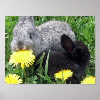 CUTE LITTLE RABBITS BUNNIES DANDELION GRASS NATURE POSTER
