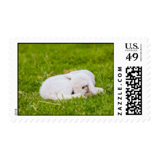 Cute Little Sleeping Lamb Stamp