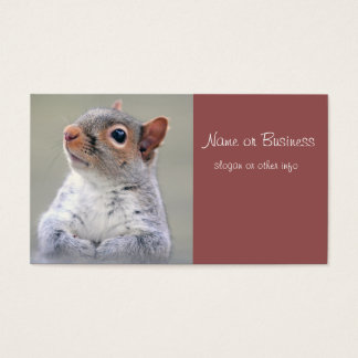 Cute Little Soft and Fluffy Gray Squirrel Business Card