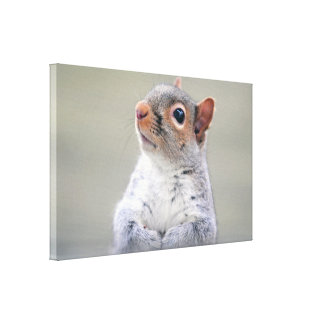 Cute Little Soft and Fluffy Gray Squirrel Canvas Print