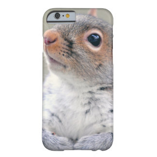 Cute Little Soft and Fluffy Gray Squirrel Barely There iPhone 6 Case
