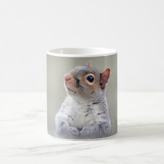 Cute Little Soft and Fluffy Gray Squirrel Coffee Mug