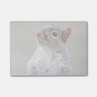 Cute Little Soft and Fluffy Gray Squirrel Post-it Notes