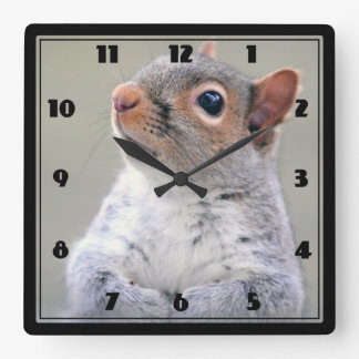 Cute Little Soft and Fluffy Gray Squirrel Square Wall Clock