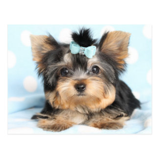 Cute Little Tiny Yorkie Pup design Postcard