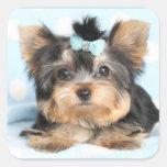 Cute Little Tiny Yorkie Pup design Square Sticker