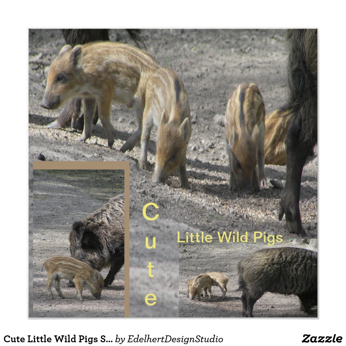 Cute Little Wild Pigs Square Poster