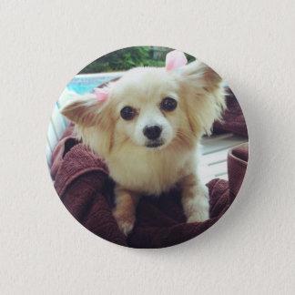 Cute Long-Haired Chihuahua Pinback Button