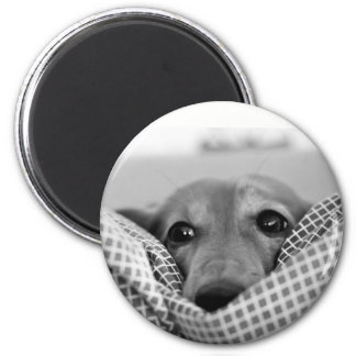 Cute long haired dachshund photo round magnet