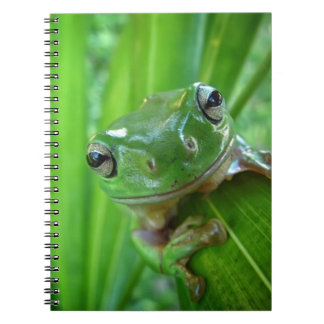 Cute Looking Tree Frog Close Up Journals
