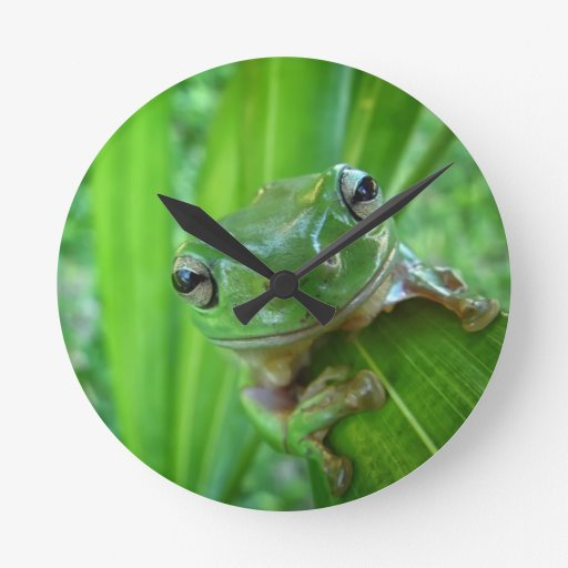 Cute Looking Tree Frog Close Up Round Wallclocks