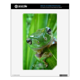 Cute Looking Tree Frog Close Up Decal For NOOK Color