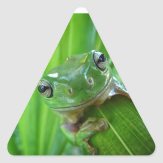 Cute Looking Tree Frog Close Up Triangle Sticker
