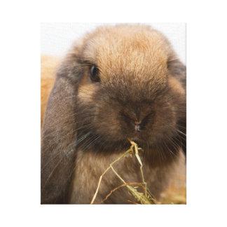 Cute lop eared bunny canvas print