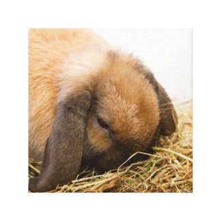 Cute lop eared bunny canvas print