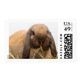 Cute lop eared bunny postage