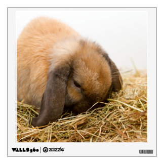 Cute lop eared bunny room decal