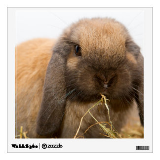 Cute lop eared bunny wall decals