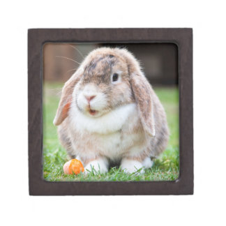 Cute Lop-Eared Rabbit in Grass with Carrot Jewelry Box