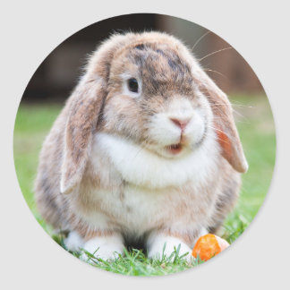 Cute Lop Eared Rabbit in the Grass with Carrot Classic Round Sticker