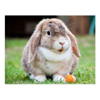Cute Lop-Eared Rabbit in the Grass with Carrot Postcard