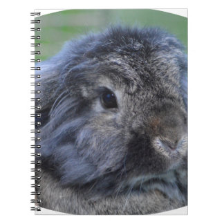 Cute lop eared rabbit spiral notebook