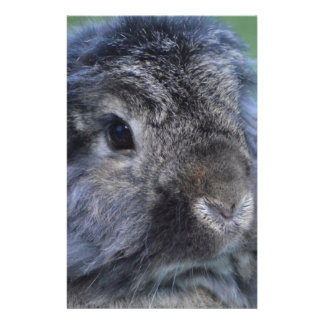 Cute lop eared rabbit stationery design