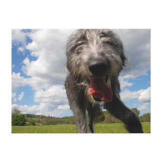 Cute Lurcher Face Canvas | Male Lurcher Puppy
