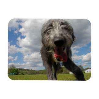 Cute Lurcher Face Magnet | Male Lurcher Puppy