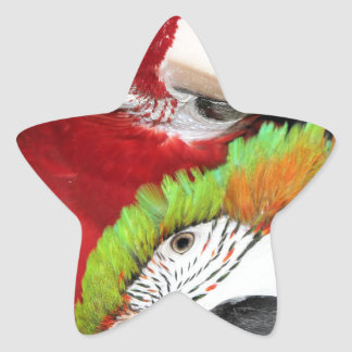 Cute macaws star stickers