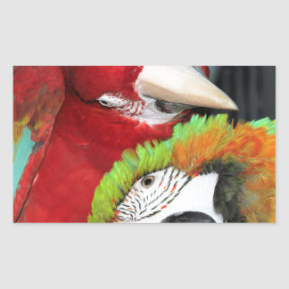 Cute macaws rectangular sticker