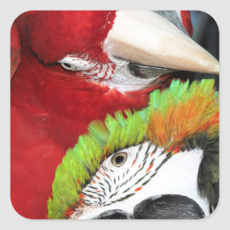 Cute macaws square sticker