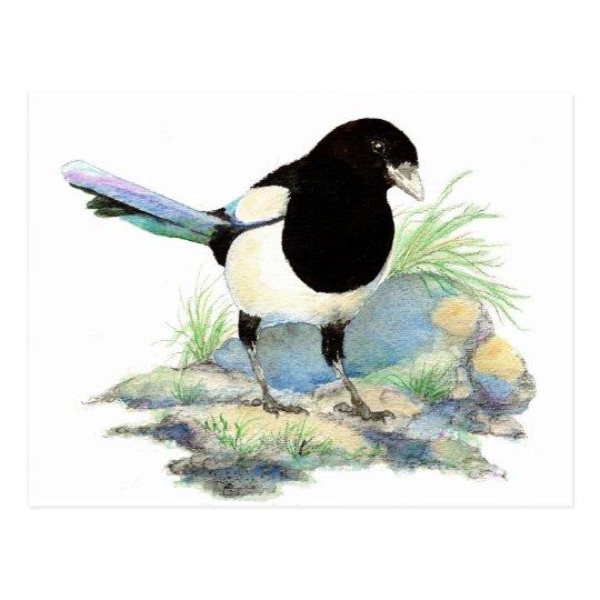 Cute Magpie  - Watercolor Bird Postcard