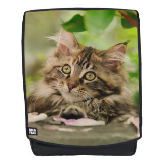 Cute Maine Coon Cat Kitten Photo - Boldface Backpack