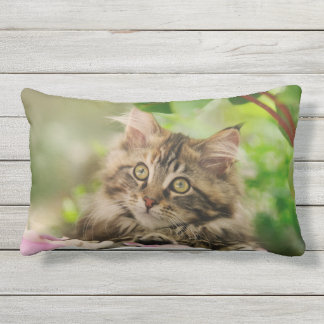 Cute Maine Coon Cat Kitten Portrait Photo  Outside Outdoor Pillow
