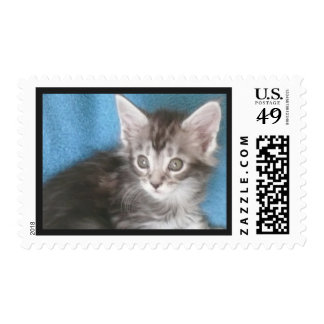 Cute Maine Coon Cat Postage Stamp