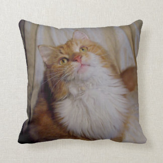 Cute maine coon cats Pillow