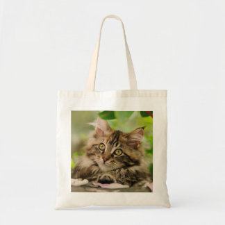 Cute Maine Coon kitten Budget Tote Bag
