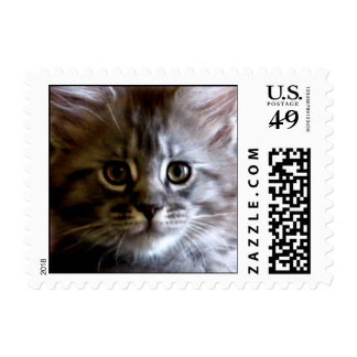 Cute Maine Coon Kitten Face postage